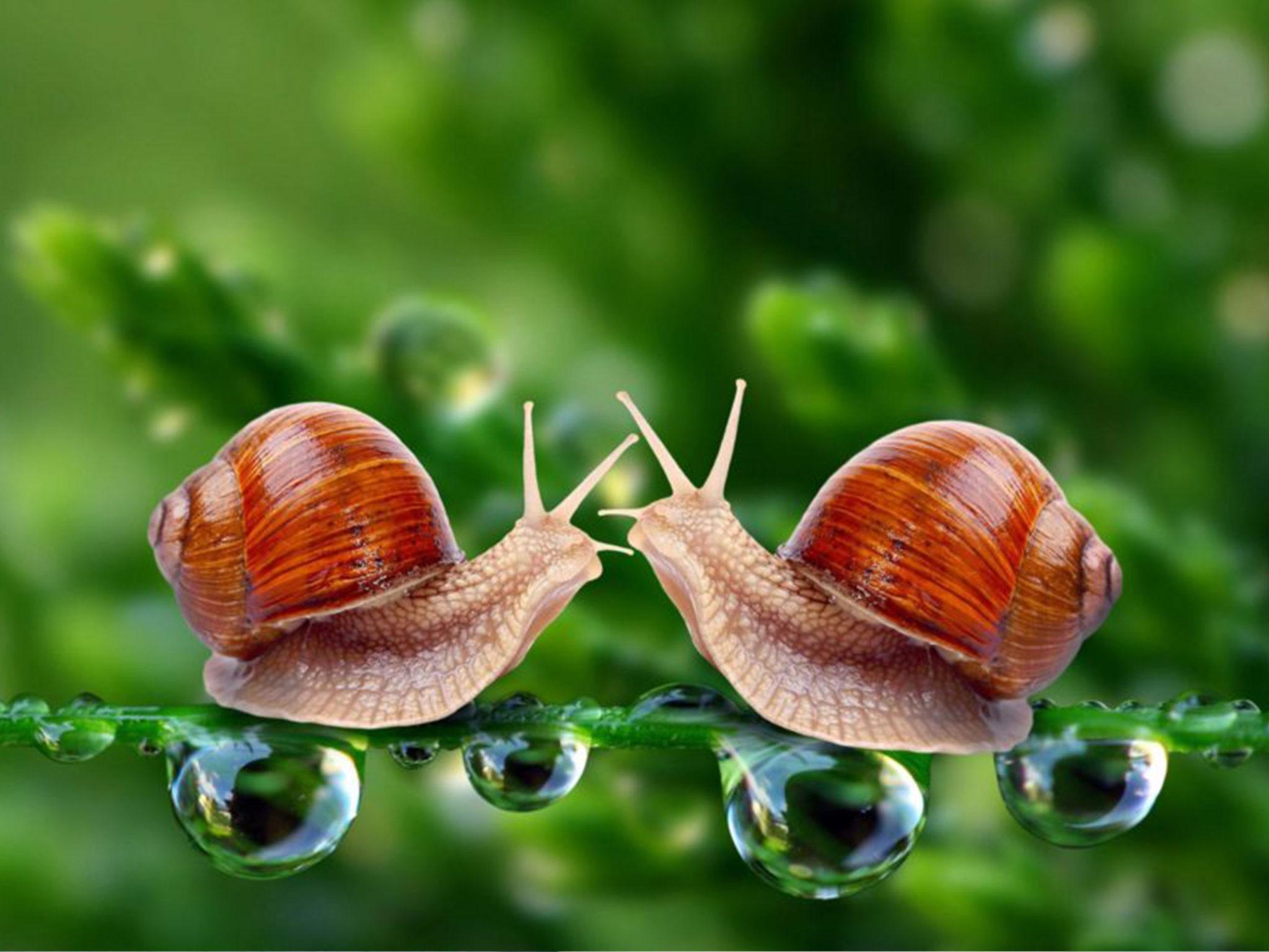 Snail Mucus Cream